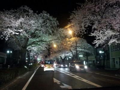 桜2012 002
